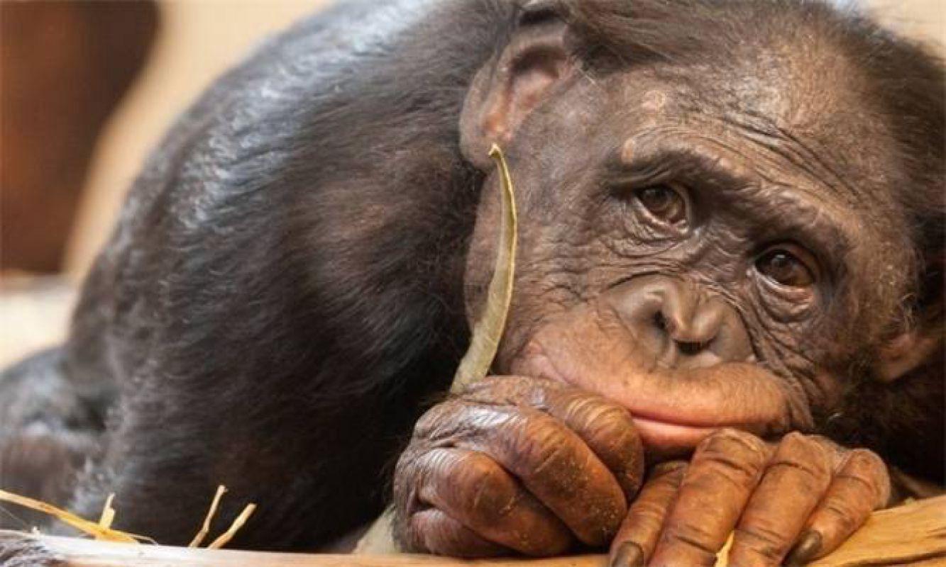 Предчувствие смерти животными