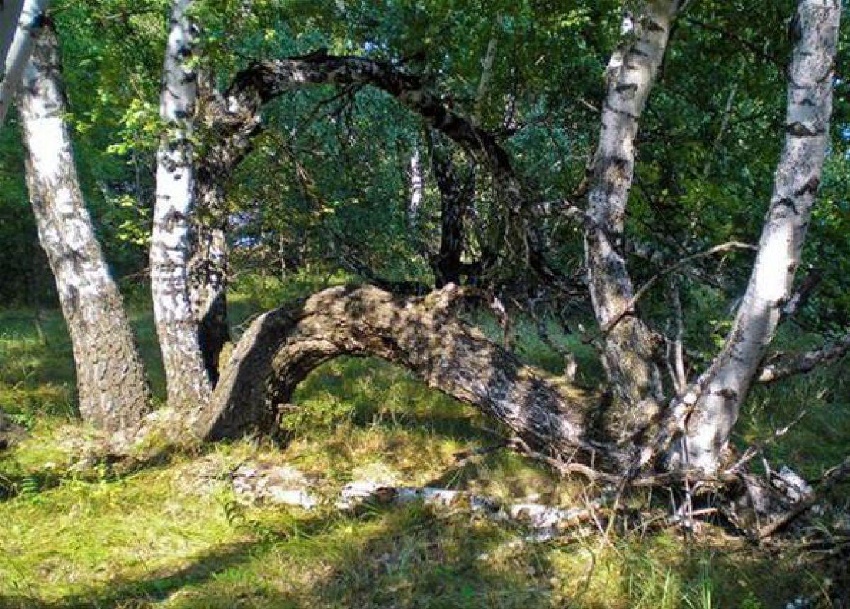 Аномальная зона – «Медведицкая гряда», где живут молнии