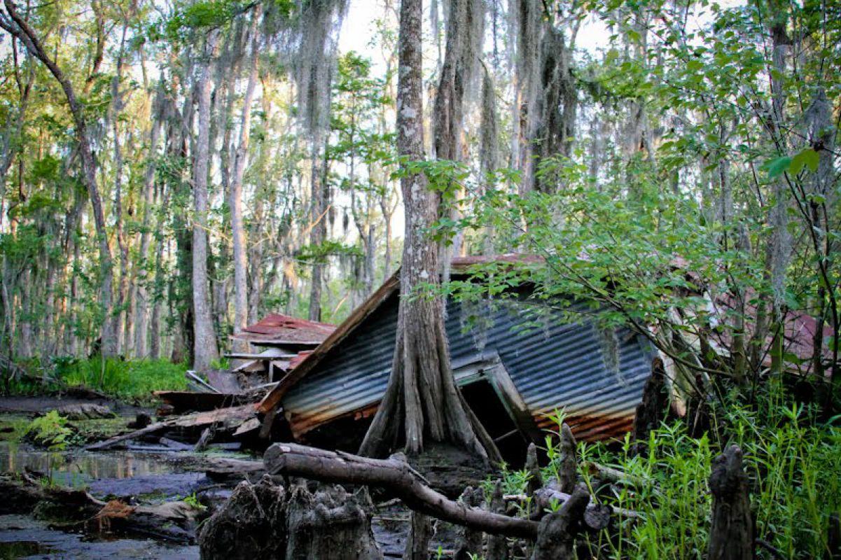 Проклятие комплекса болот Манчак (штат Луизиана, США)