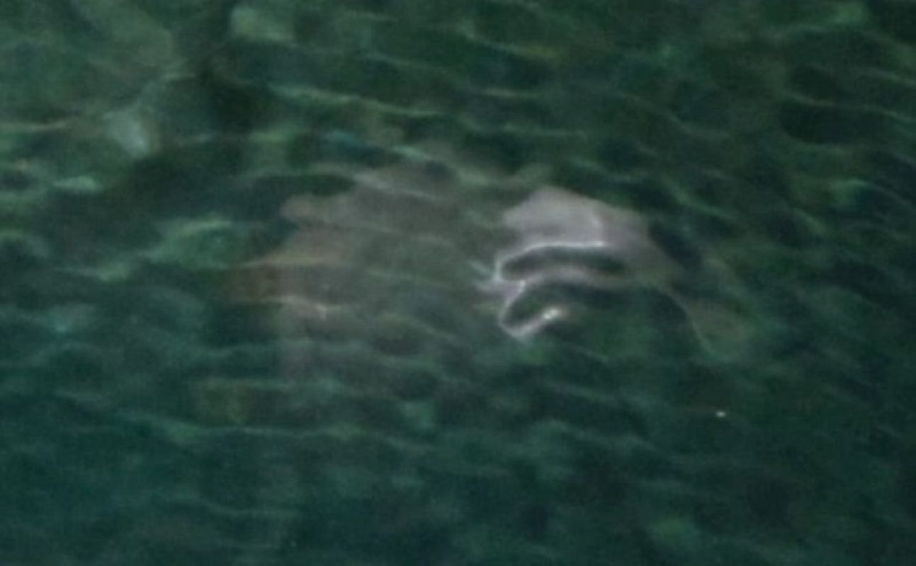 Недалеко от побережья Кофру засняли странное существо