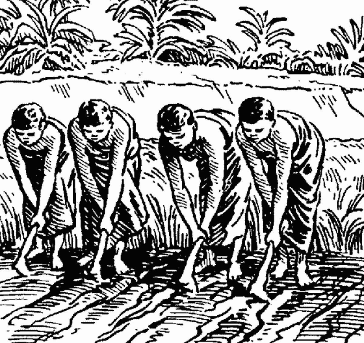 Таинственный манускрипт «Такенучи» может оказаться историей человечества