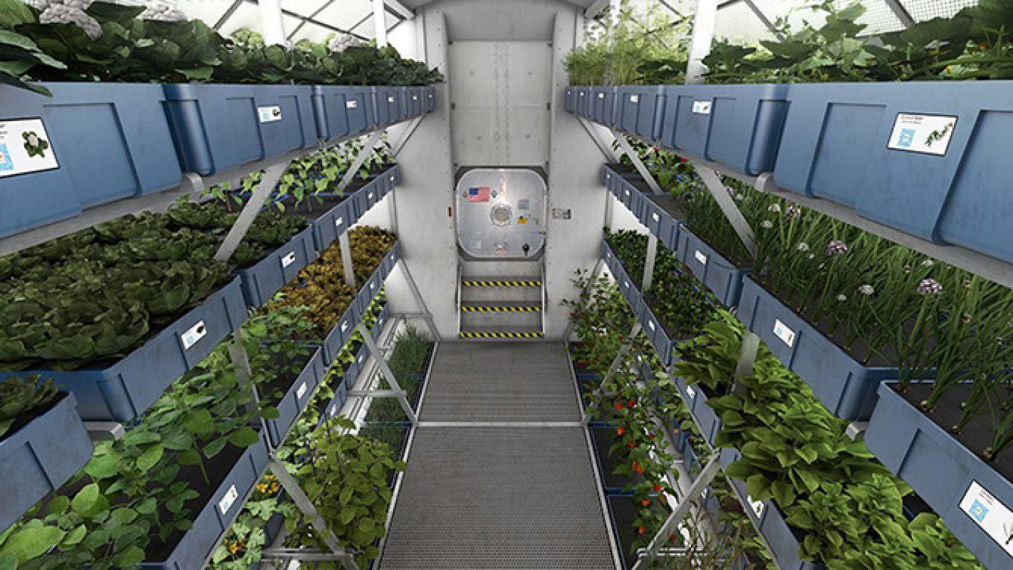 Учёные начнут выращивать на МКС органы для космонавтов