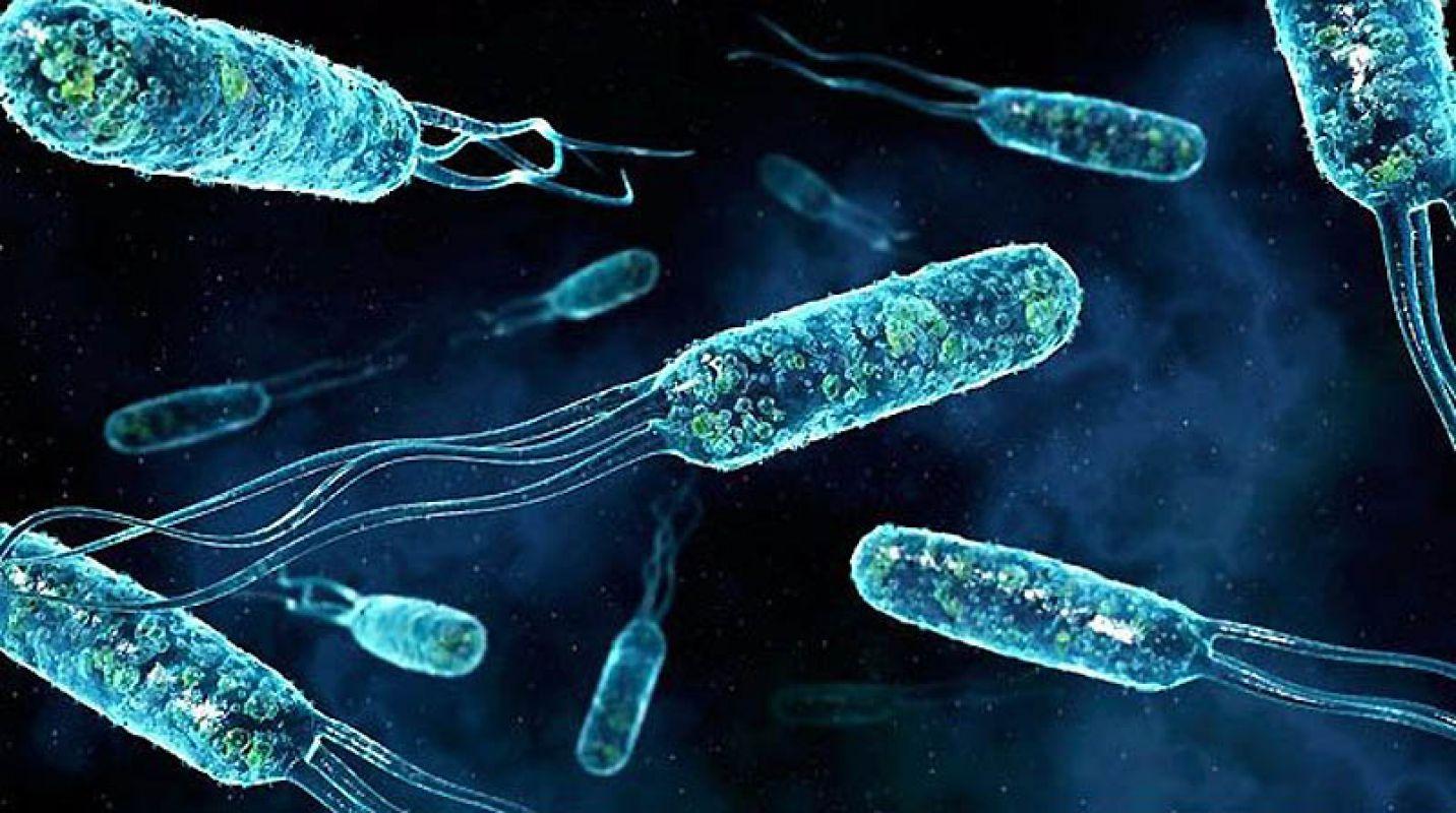 На МКС нашли живые бактерии, «прилетевшие из космоса»