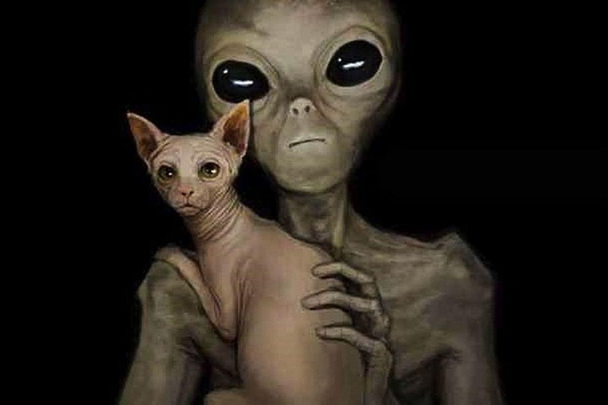 В США девушка столкнулась с шокирующим инопланетным существом, случайно сняла его на камеру и показала фото в Сети