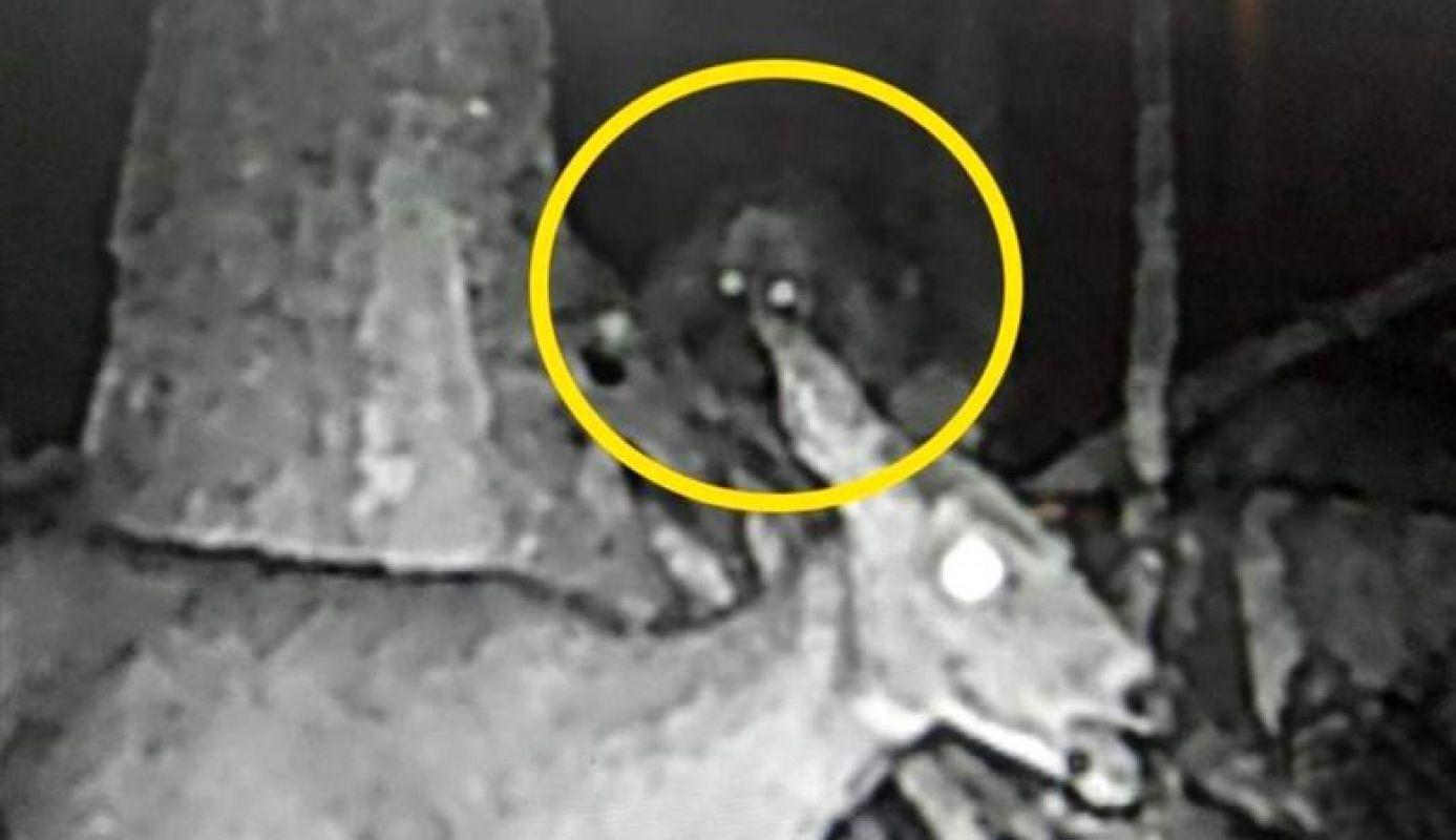 Уфологи шокированы фотографией пришельца в Мичигане