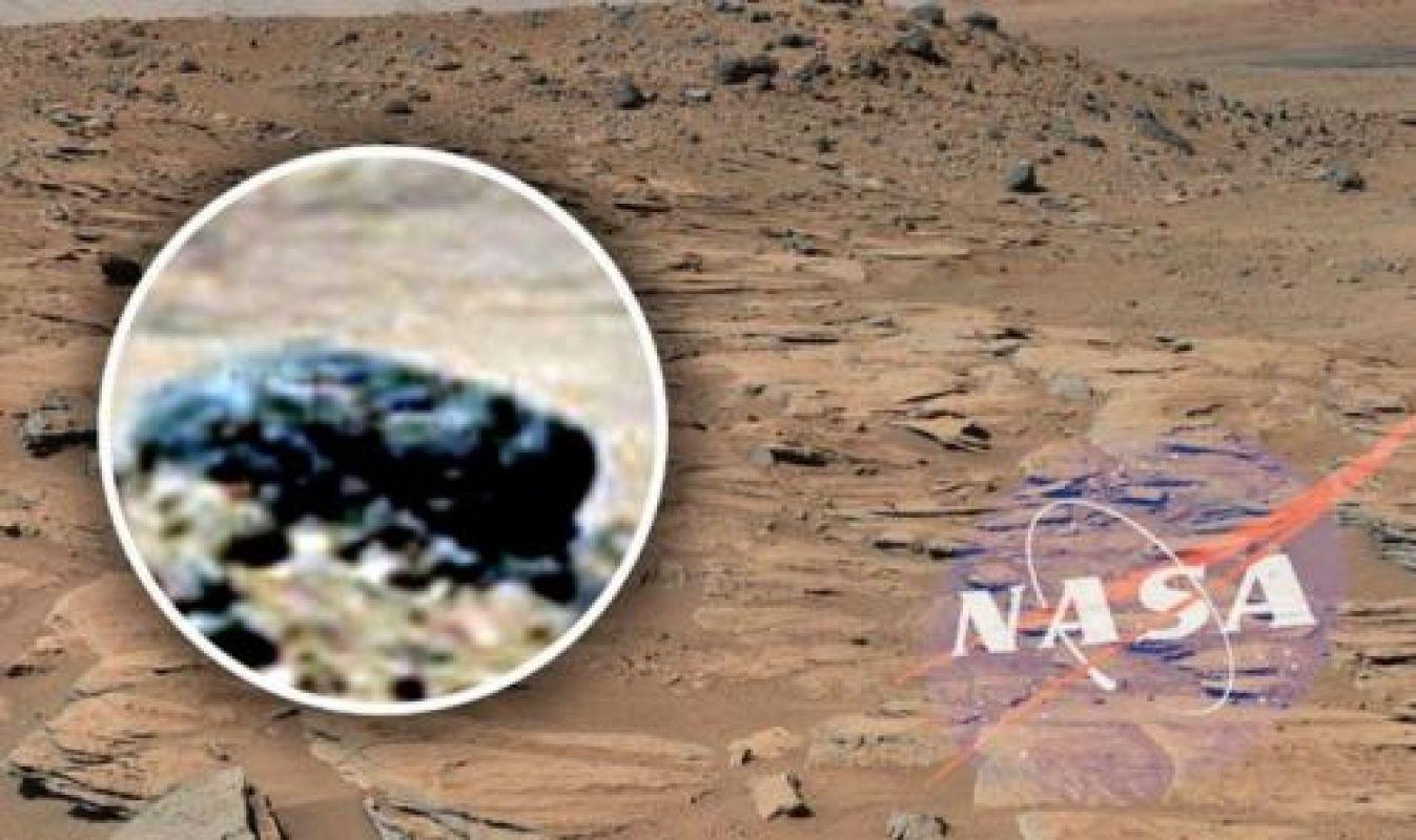 Уфолог Скотт Уоринг сообщил об обнаружении на Марсе черепа «Чужого»