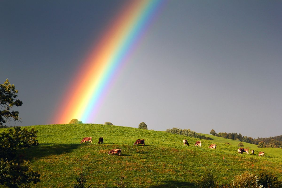 Как такое может быть? Странная радуга поразила жителей Нью-Джерси, но была объяснена учёными
