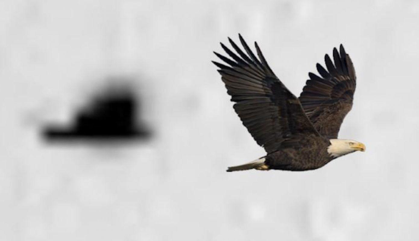 Уфолог считает, что на Марсе был запечатлён настоящий орёл