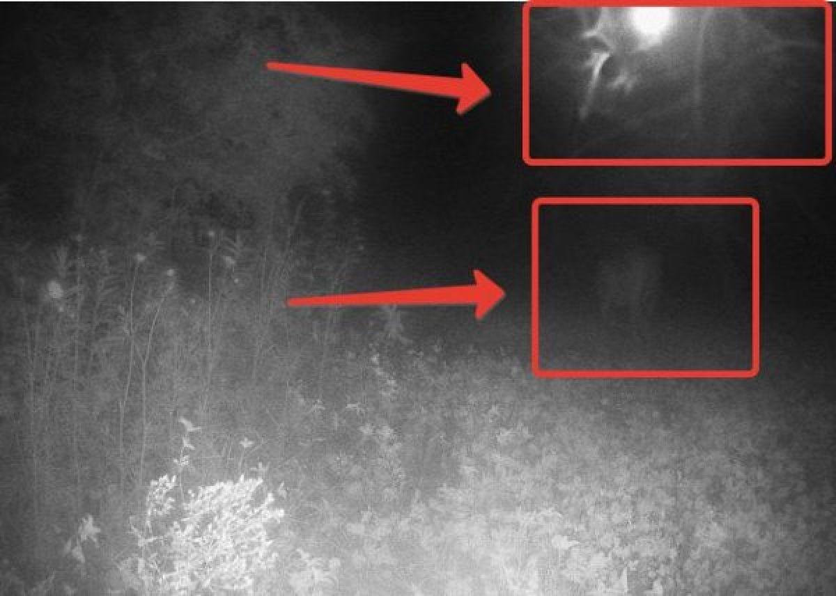 Житель Висконсина сфотографировал момент, когда НЛО пытался похитить оленя
