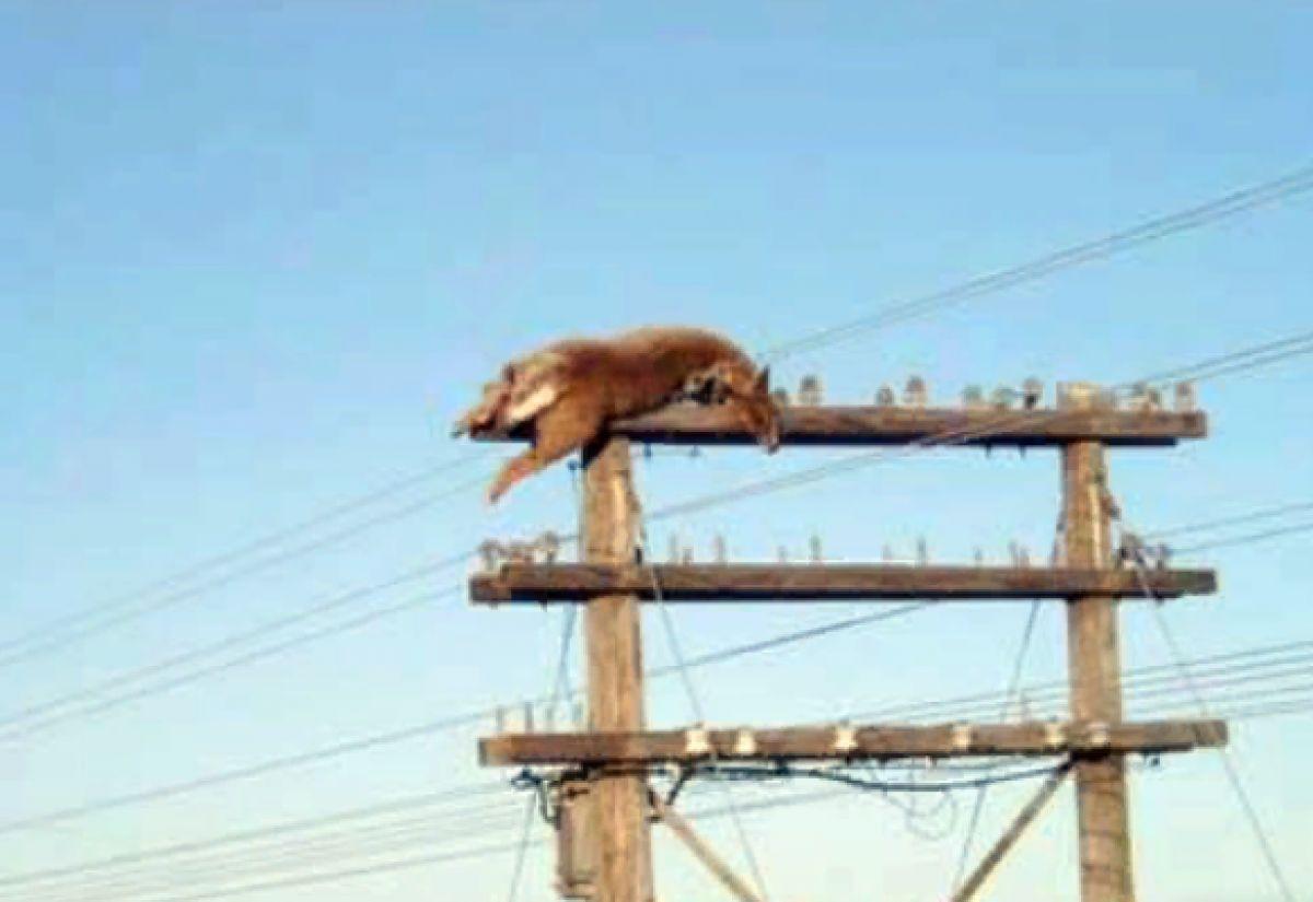 В США НЛО поднял оленя и сбросил его на провода, есть шокирующее фото