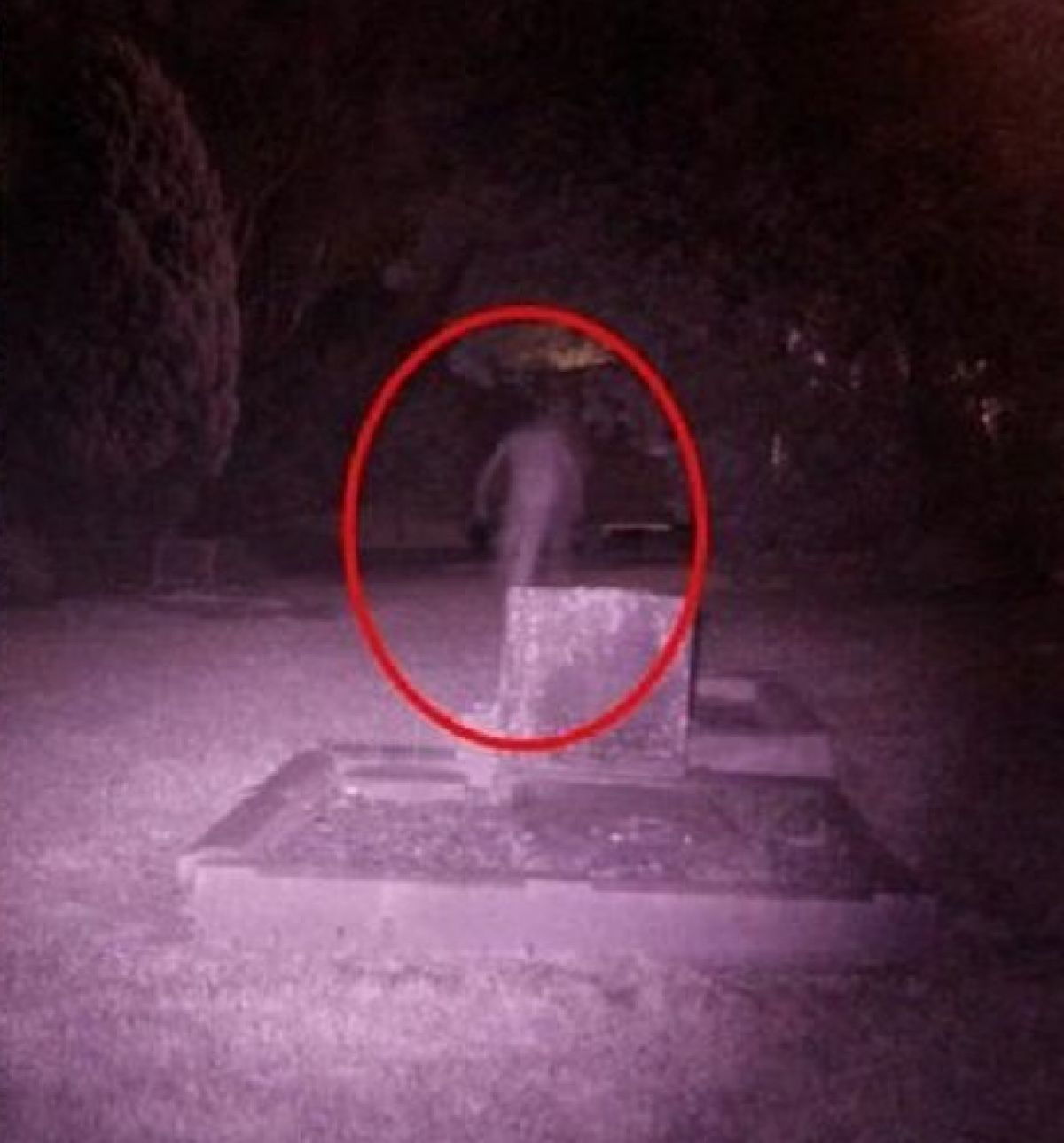 Пришелец разрыл десятки могил на подмосковном кладбище и забрал с собой трупы, есть фото злодея
