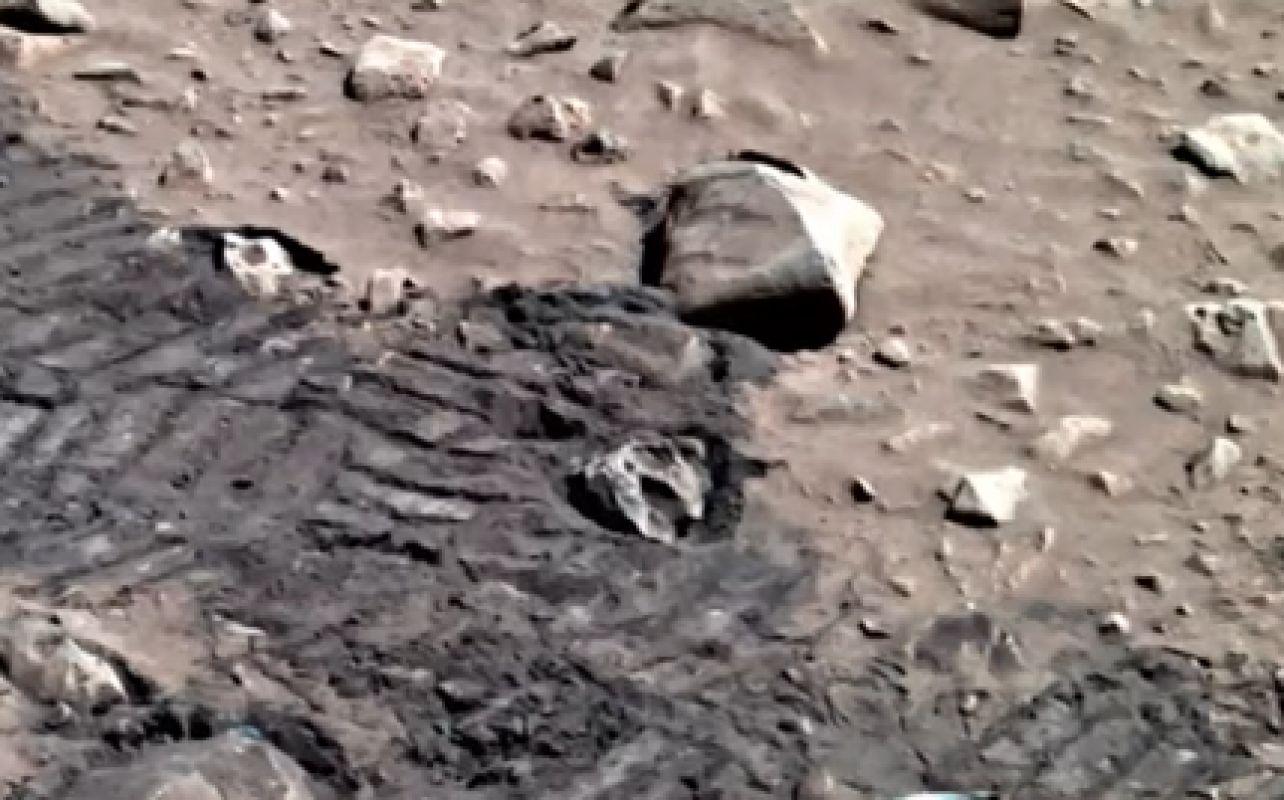 Найденная на Марсе рептилия, шокировавшая общественность, ввела в ступор исследователей