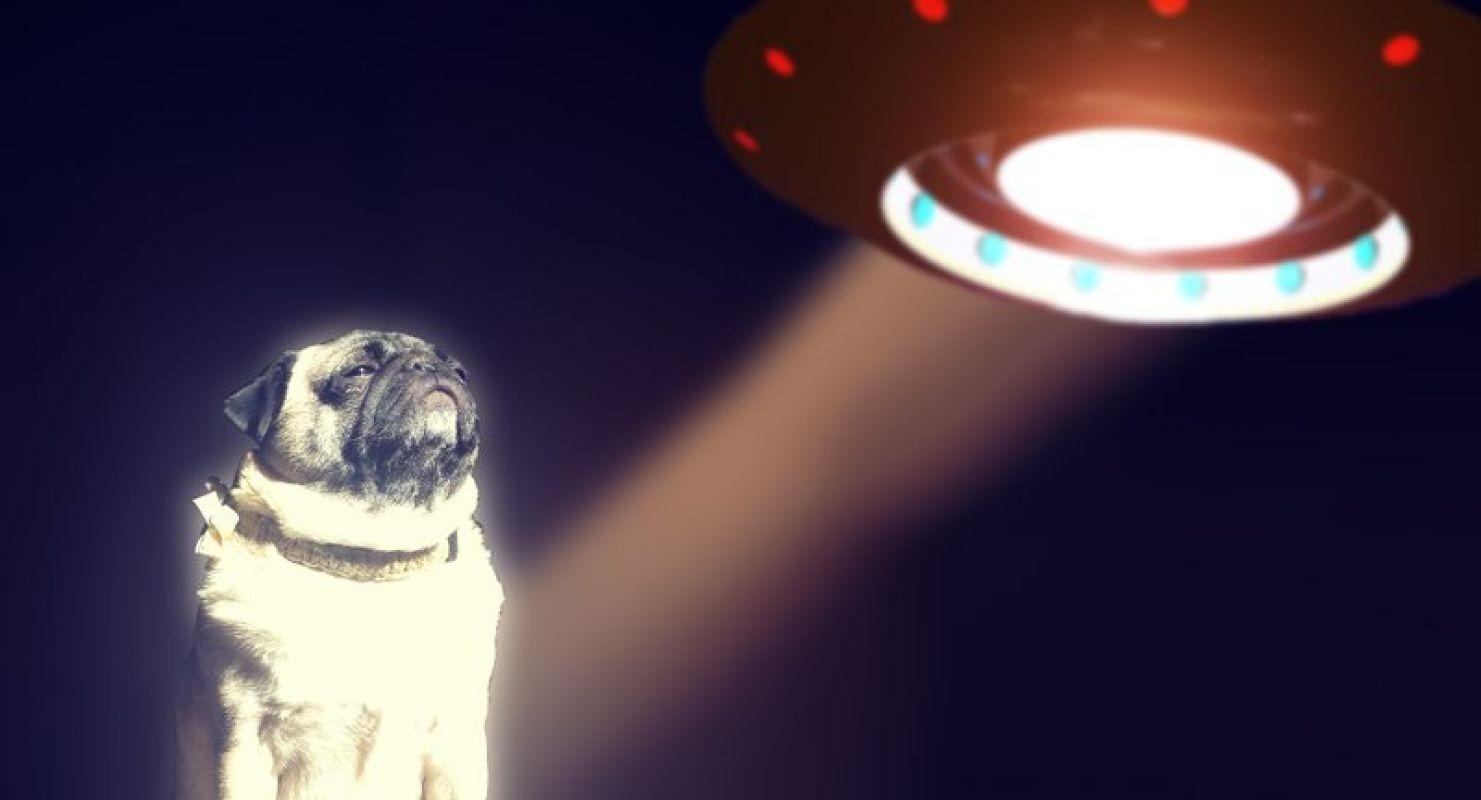 Специалисты рассказали, как ведут себя животные, когда рядом пришельцы