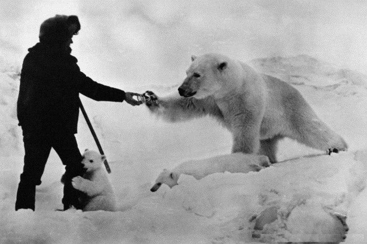 Картинки по запросу День полярника в России