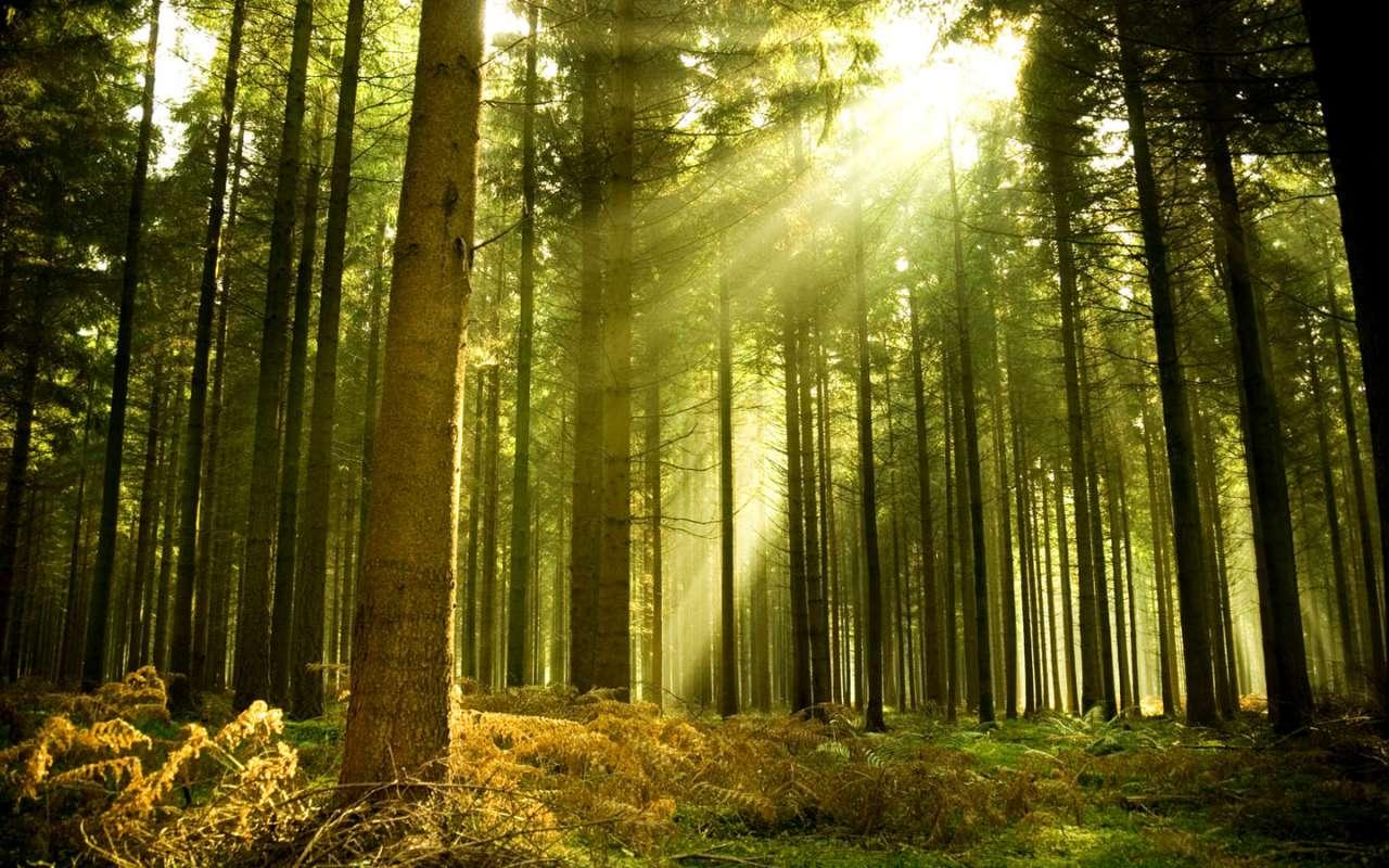 Незаконная рубка леса в Новоуральске