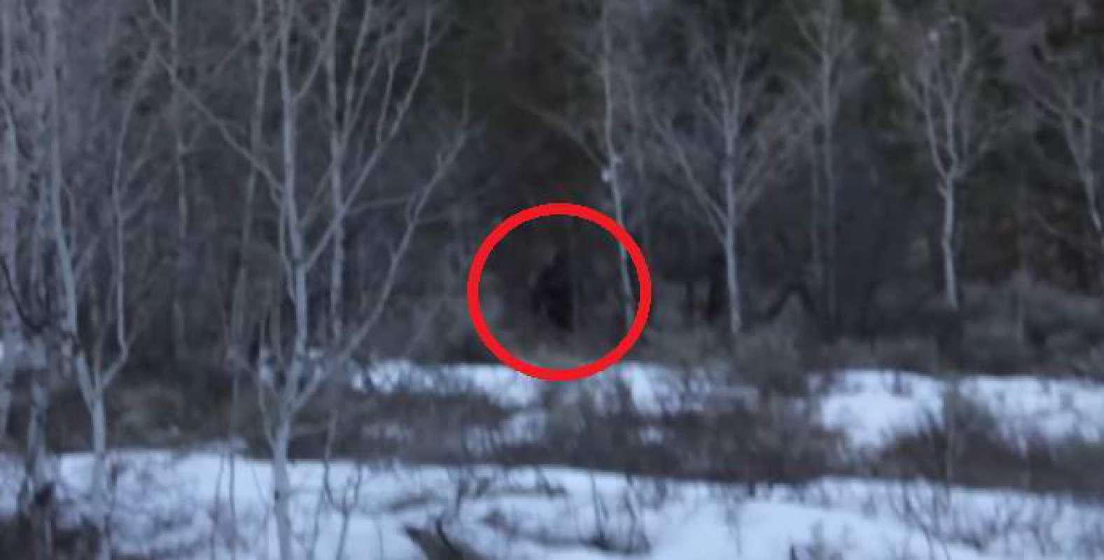 Принудили в лесу 16 фотография