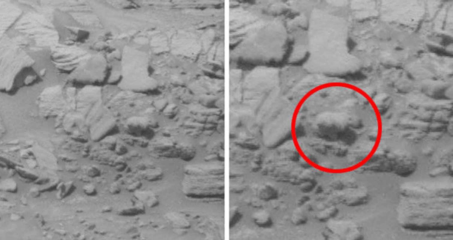 Животные на марсе фото 4
