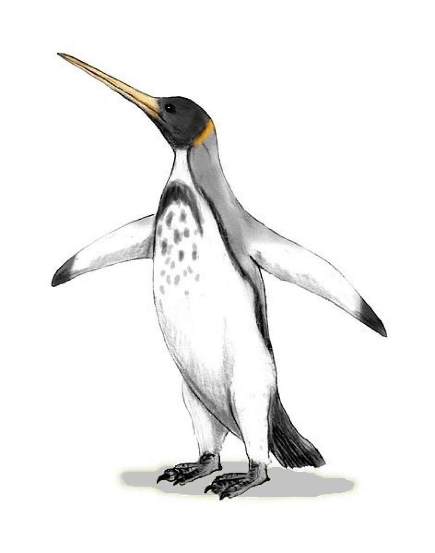 Палеонтологами обнаружены окаменелые останки пингвина, возраст которого около 60 млн лет