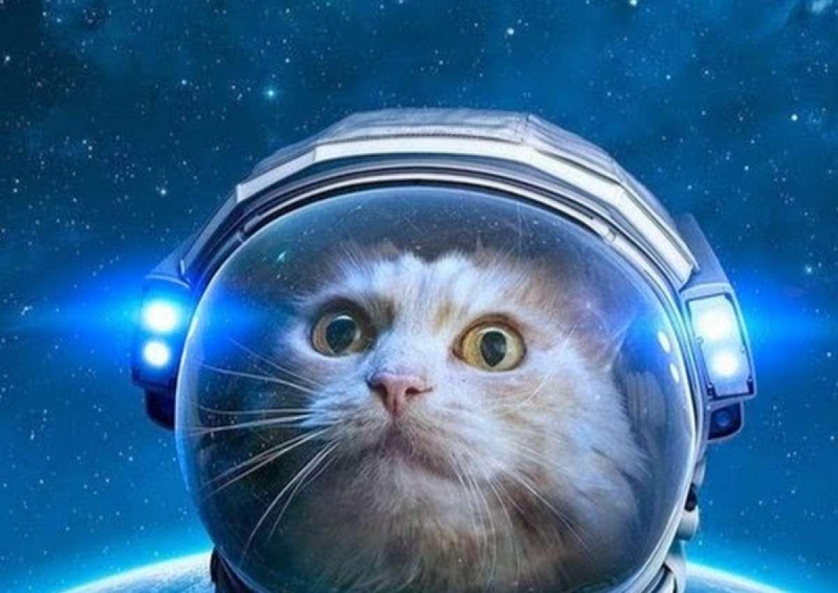 картинки животные в космосе собеседования данном