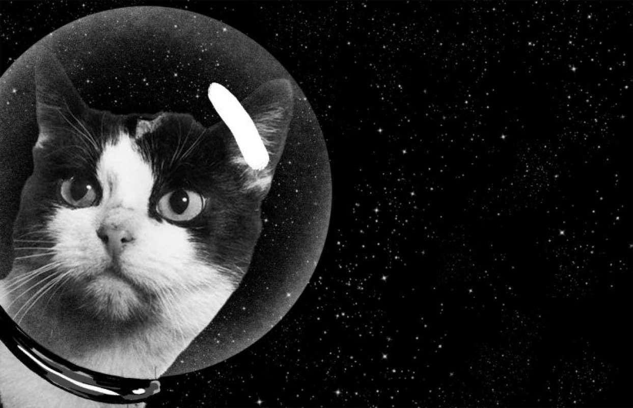 Эксперты уверены, что коты присланы на Землю пришельцами, чтобы контролировать каждый шаг человека, есть и коты-потрошители