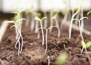 Когда сожать растения и ухаживать за ними по лунному календарю огородника и садовода на май 2021 года