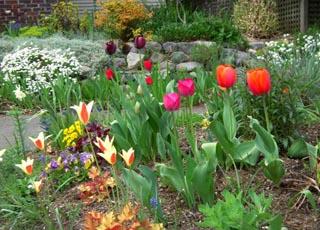 Лунный календарь огородника и садовода на Март 2020 года и влияние фазы луны на посадку растений