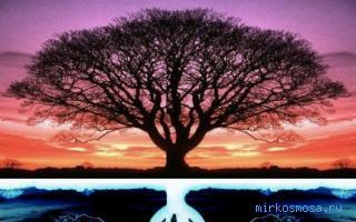 Дерево во сне видеть