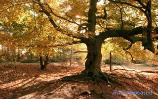 толкование сна дерево