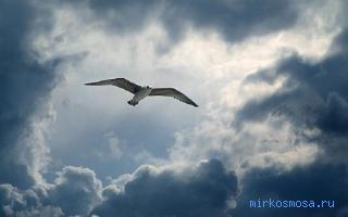 сниться чему к в небо улетать