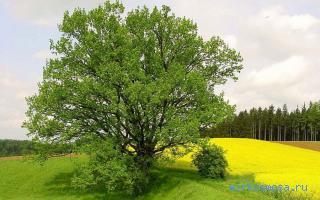 приснилось дерево