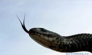 Сонник змея во сне нападает