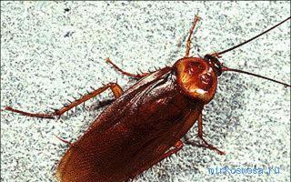Во сне видеть тараканов