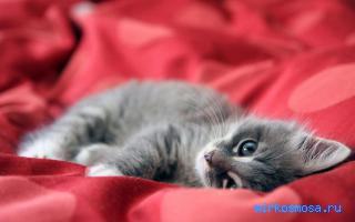Играл с котом во сне