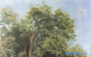 почему во сне снится дерево