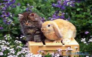 К чему снится кролик держать
