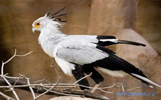 Птица почему во сне снится