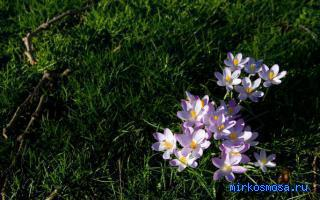 К чему снятся цветы в воде