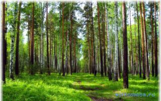 если снится красивый зеленый лес