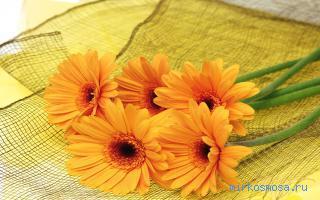 Сонник цветы распускаются