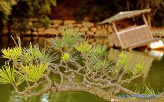 к чему зеленые снятся ветви