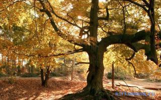 Дерево почему во сне снится