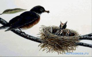 почему во сне снится птица