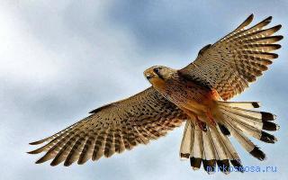 Птица почему сниться