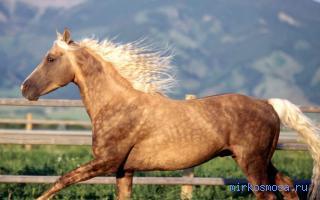 сонник черный конь летающий