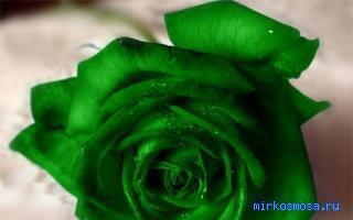 Во сне зеленый цвет к чему снится