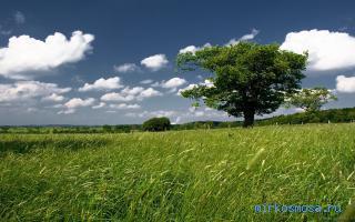 Дерево что значит, когда снится