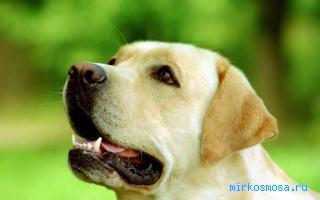 Фото Собака с ошейником сонник
