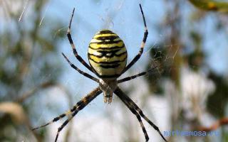 тебе снится к приближается который паук чему