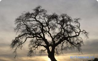 Дерево почему сниться