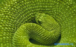 сниться зеленые змеи чему к
